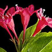 Flower Composite Trio Horizontal Poster