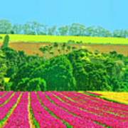 Flower Farm And Hills Poster