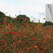 Flower Field In Hama-rikyu Gardens Poster