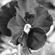Flower In Garden Poster