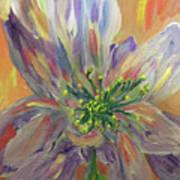 Flower In Morning Light Poster
