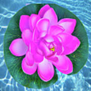 Flower In The Pool Poster