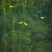 Flower In The Stream - Digital Art Poster