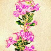 Flower-j Poster