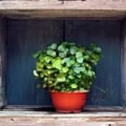 Flower Pot In A Window Poster
