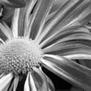 Flower Run Through It Black And White Poster