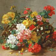 Flower Study Poster