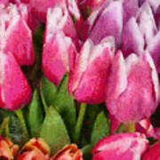 Flower - Tulip - A Young Girls Delight Poster