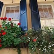 Flower Window In Charleston Sc Poster