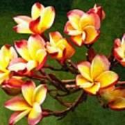 Flowerage Poster