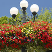 Flowered Lamppost Poster