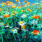 Flowerfield Poster