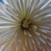 Flowering Burst Poster