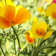 Flowering Garden Poster
