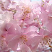 Flowering Tree Art Prints Spring Pink Blossom Flowers Baslee Poster