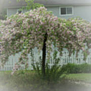 Flowering Tree By Earl's Photography Poster