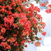 Flowering Tree Poster