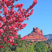 Flowering Tree - Sedona Red Rock Poster