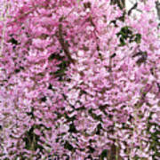Flowering Willow Poster
