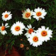 Flowering Yew Poster