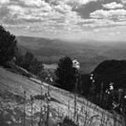 Flowers At Table Rock Overlook In Black And White Two Poster