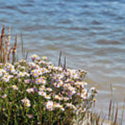 Flowers At The Lake Poster