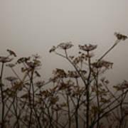 Flowers In California Fog Poster
