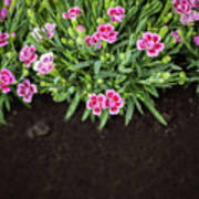 Flowers In Grass Growing From Natural Clean Soil Poster