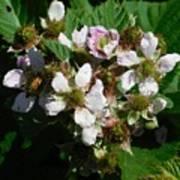 Flowers Of Berries Poster