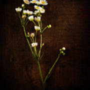 Flowers On Wood Poster