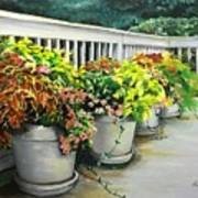 Flowers Pots On Deck Poster