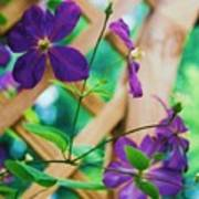 Flowers Purple Poster