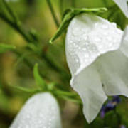 Flowers With Droplets 4 Poster