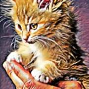 Fluffy Orange Kitten Poster