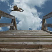 Fly By At The Beach - Brown Pelican And Rustic Stairs Poster