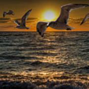 Flying Gulls At Sunset Poster