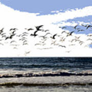 Flying Gulls Poster