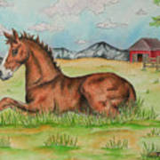 Foal In Grass Poster