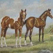 Foals In Pasture Poster by Dorothy Coatsworth