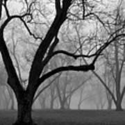 Fog 2 Poster by Beverly Hammond