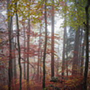 Fog In Autumn Forest Poster