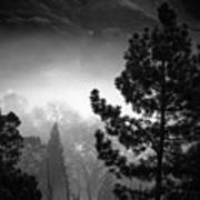 Fog In The Trees Poster