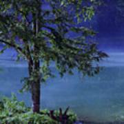 Fog Over The Pond Poster