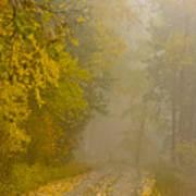 Foggy Autumn Morn Poster