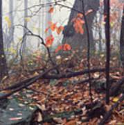 Foggy Fall Woodland Morning Poster