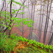Foggy Misty Spring Morning Poster by Thomas R Fletcher