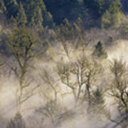 Foggy Morning In Sandy River Valley Poster