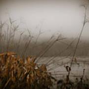 Foggy Morning Marsh Poster