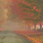 Foggy Morning On Cloudland Road Poster