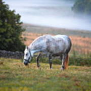 Foggy Pasture Poster